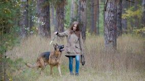 Mujer joven que juega con un perro de pastor en el bosque del otoño - tiros un palillo Fotografía de archivo libre de regalías