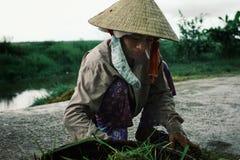 mujer joven que recoge la verdura de la tierra a una cesta en un sombrero cónico tradicional imagen de archivo