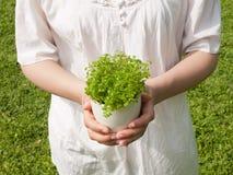Mujer joven que sostiene la planta potted Fotografía de archivo libre de regalías
