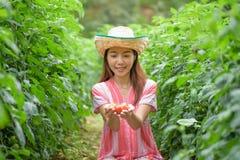 Mujer joven que sostiene los tomates en huerto Foto de archivo