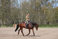 Mujer joven que trota en el caballo Fotografía de archivo libre de regalías