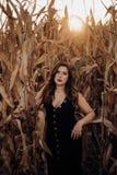 Mujer joven sensual con el vestido negro en un campo de maíz foto de archivo