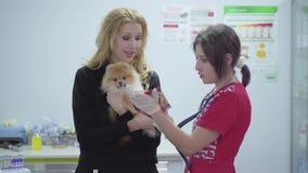 Mujer joven sonriente que sostiene el perro de Pomerania pomeranian del pequeño perro en manos que habla con la enfermera en cier almacen de metraje de vídeo