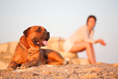 Mujer joven y el perro Fotos de archivo libres de regalías