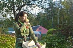 Mujer joven y manzanas foto de archivo libre de regalías