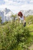 Mujer linda que escoge las hojas de la ortiga tacaña Imagen de archivo libre de regalías