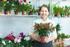 Mujer madura con la planta de la fruta cítrica Fotos de archivo