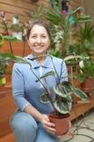 Mujer madura feliz con la planta de Calathea Imagen de archivo libre de regalías
