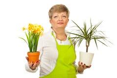 Mujer madura que muestra los crisoles de las plantas Foto de archivo
