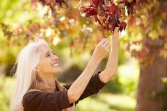 Mujer madura que se relaja en Autumn Landscape Imagenes de archivo