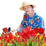 Mujer mayor con las flores de los tulipanes que cultivan un huerto Fotos de archivo libres de regalías