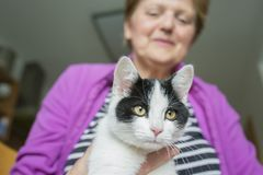 Mujer mayor con un gato - terapia animal imagen de archivo