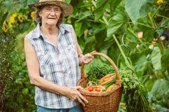Mujer mayor con una cesta de verduras cosechadas Imágenes de archivo libres de regalías