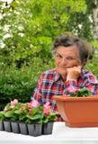 Mujer mayor - cultivando un huerto Fotos de archivo libres de regalías