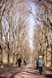 Mujer mayor en caminata en parque Fotos de archivo libres de regalías
