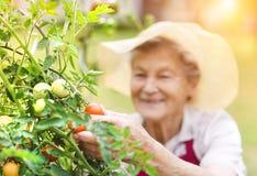 Mujer mayor en su jardín fotos de archivo libres de regalías
