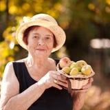 Mujer mayor feliz que sostiene manzanas Fotografía de archivo