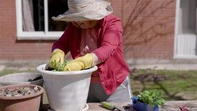 Mujer mayor ocupada con los brotes en el patio trasero almacen de video