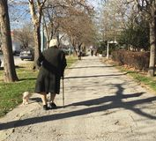 Mujer mayor que camina con su perro Imagenes de archivo