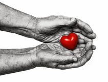 Mujer mayor que mantiene el corazón rojo sus palmas Fotos de archivo libres de regalías