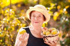 Mujer mayor que sostiene manzanas verdes Fotos de archivo