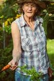 Mujer mayor que sostiene una zanahoria cosechada en su mano Foto de archivo libre de regalías