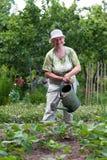 Mujer mayor que trabaja en jardín Fotos de archivo libres de regalías