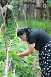 Mujer mayor que trabaja en jardín Fotografía de archivo