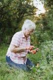 Mujer mayor que usa su teléfono mientras que cultiva un huerto fotos de archivo libres de regalías