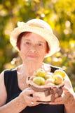Mujer mayor sonriente que sostiene manzanas verdes Foto de archivo