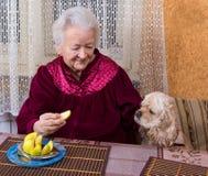 Mujer mayor y su perro imágenes de archivo libres de regalías