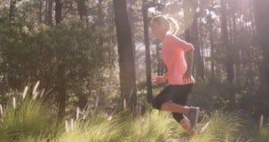 Mujer que activa a través de bosque almacen de metraje de vídeo