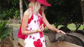 Mujer que alimenta la tortuga gigante metrajes
