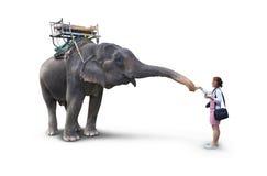 Mujer que alimenta los plátanos del elefante Imagen de archivo libre de regalías
