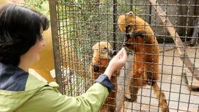 Mujer que alimenta un animal en un parque zoológico almacen de video
