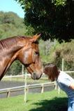 Mujer que besa el caballo Imagenes de archivo