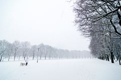Mujer que camina con un perro en un día frío durante una caída de la nieve en el parque de Vigeland, Oslo Imagenes de archivo