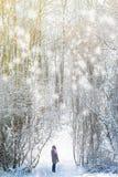 Mujer que camina en el bosque del invierno Imagen de archivo