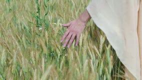 Mujer que camina en un campo de las amapolas y del trigo que los tocan con los rayos del sol en fondo del espacio de la copia del almacen de metraje de vídeo