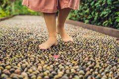 Mujer que camina en un pavimento de adoquín texturizado, Reflexology Guijarro Fotografía de archivo libre de regalías