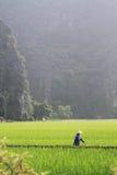 Mujer que camina a través de un campo en Vietnam Foto de archivo