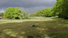Mujer que camina a través del campo común de Chorleywood con el cochecito de niño y dos perros metrajes
