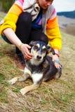 Mujer que cepilla su perro en prados de la primavera Foto de archivo libre de regalías