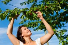 Mujer que come cerezas en verano Imagenes de archivo