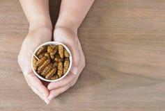Mujer que come el bómbice Mori de las crisálidas del gusano de seda de los insectos Su mano que sostiene la taza disponible que c imágenes de archivo libres de regalías
