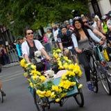 Mujer que completa un ciclo con los perros - evento de ciclo de RideLondon, Londres 2015 Imágenes de archivo libres de regalías