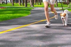 Mujer que corre con el perro al aire libre Fotos de archivo