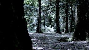 Mujer que corre en el bosque asustado almacen de metraje de vídeo