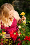 Mujer que corta las rosas en jardín Imagen de archivo libre de regalías