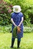 Mujer que cosecha zanahorias Imagen de archivo libre de regalías